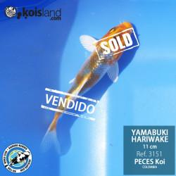 REF.3151 - Yamabuki Hariwake 11cm