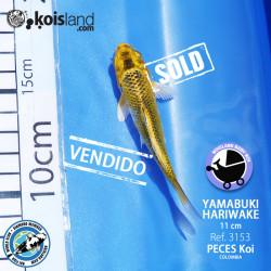 REF.3153 - Yamabuki Hariwake 11cm