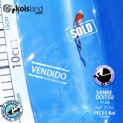REF.3156 - Sanke Doitsu 11cm
