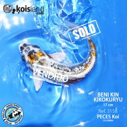 REF.3158 - Beni KIN Kikokuryu 17cm