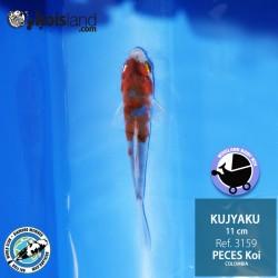 REF.3159 - Kujyaku 11cm