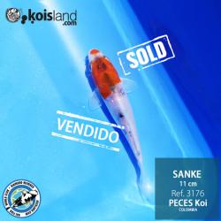 REF.3176 - Sanke 11cm