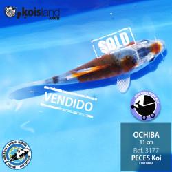 REF.3177 - Ochiba 11cm