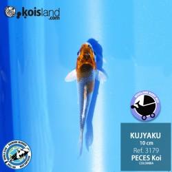 REF.3179 - Kujyaku 10cm