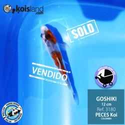 REF.3180 - Goshiki 12cm