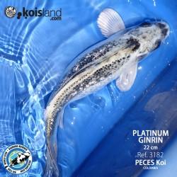 REF.3182 - Platinum Ginrin 22cm
