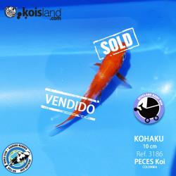 REF.3186 - Kohaku 10cm