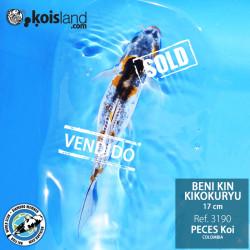 REF.3190 - Beni KIN Kikokuryu 17cm