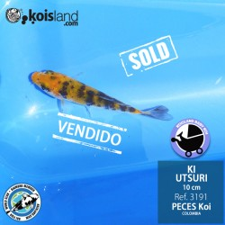 REF.3191 - Ki Utsuri 10cm