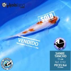 REF.3192 - Tancho Sanke 11cm