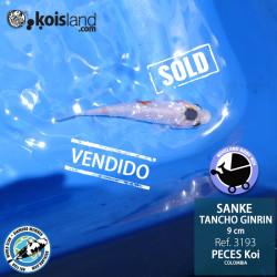 REF.3193 - Tancho Sanke Ginrin 9cm