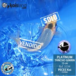REF.3194 - Tancho Platinum Ginrin 13cm