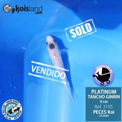 REF.3195 - Tancho Platinum Ginrin 9cm