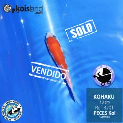 REF.3200 - Kohaku 11cm