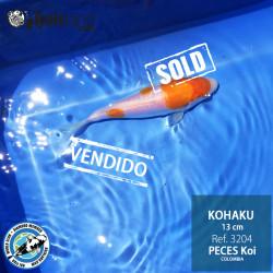 REF.3204 - Kohaku 13cm