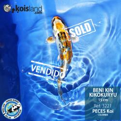 REF.3221 - Beni KIN Kikokuryu 15cm