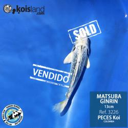 REF.3226 - Matsuba Ginrin 13cm