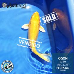 REF.3228 - Ogon 22cm