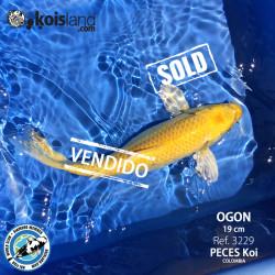 REF.3229 - Ogon 19cm