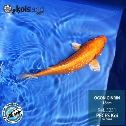 REF.3231 - Ogon Ginrin 18cm