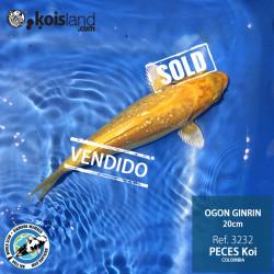 REF.3232 - Ogon Ginrin 20cm