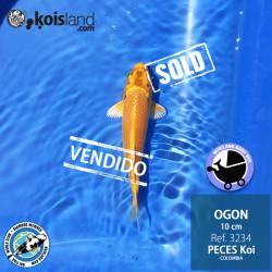REF.3234 - Ogon 10cm