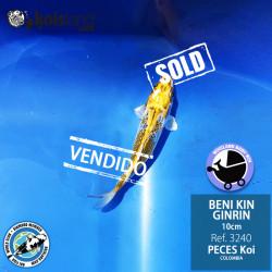 REF.3240 - Beni KIN Ginrin 10cm