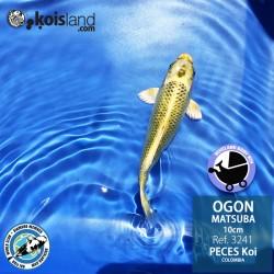 REF.3241 - Ogon Matsuba 10cm