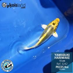 REF.3242 - Yamabuki Hariwake 15cm