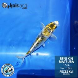 REF.3245 - Beni KIN Matsuba 17cm