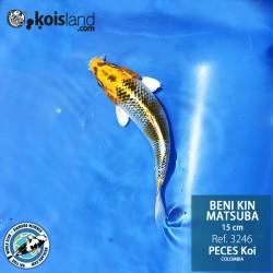 REF.3246 - Beni KIN Matsuba 15cm