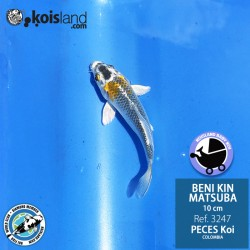 REF.3247 - Beni KIN Matsuba 10cm