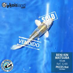 REF.3248 - Beni KIN Matsuba 15cm