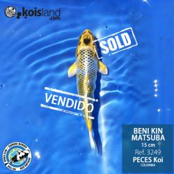 REF.3249 - Beni KIN Matsuba 15cm