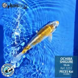 REF.3251 - Ochiba Shigure 18cm