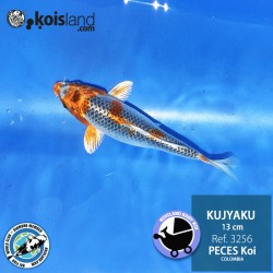 REF.3256 - Kujyaku 13cm