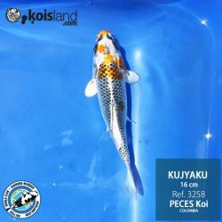 REF.3258 - Kujyaku 16cm