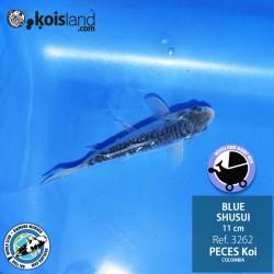 REF.3262 - BLUE SHUSUI 11cm