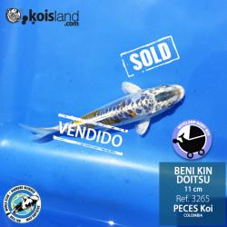 REF.3265 - BENI KIN DOITSU 11cm