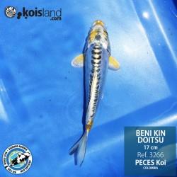 REF.3266 - BENI KIN DOITSU 17cm