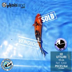 REF.3268 - Hi Utsuri 10cm