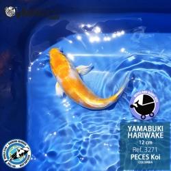 REF.3271 - Yamabuki Hariwake 12cm