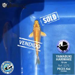 REF.3275 - Yamabuki Hariwake 10cm