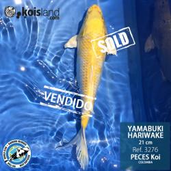 REF.3276 - Yamabuki Hariwake 21cm