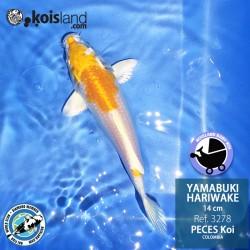 REF.3278 - Yamabuki Hariwake 14cm