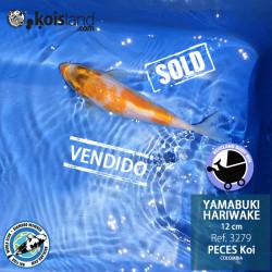 REF.3279 - Yamabuki Hariwake 12cm