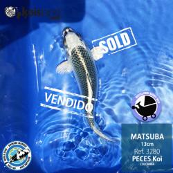 REF.3280 - Matsuba 13cm