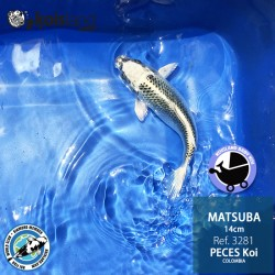 REF.3281 - Matsuba 14cm