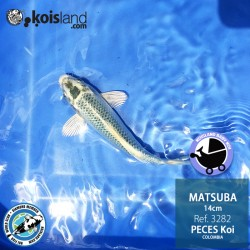 REF.3282 - Matsuba 14cm
