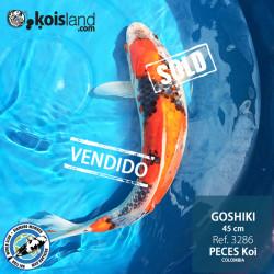 REF.3286 - Goshiki 45cm